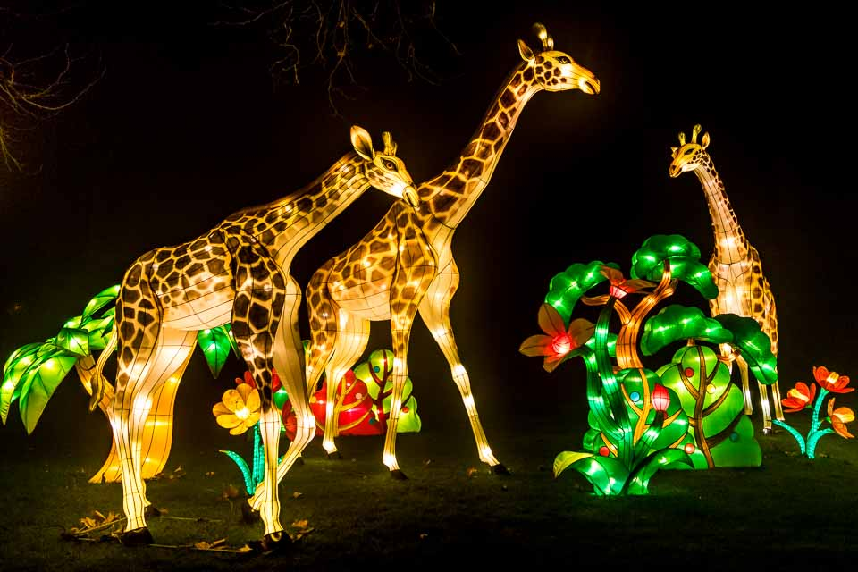 China Light at Antwerp Zoo